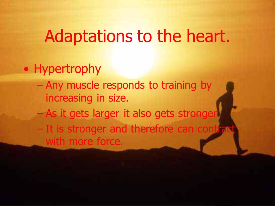 Adaptations to the heart.