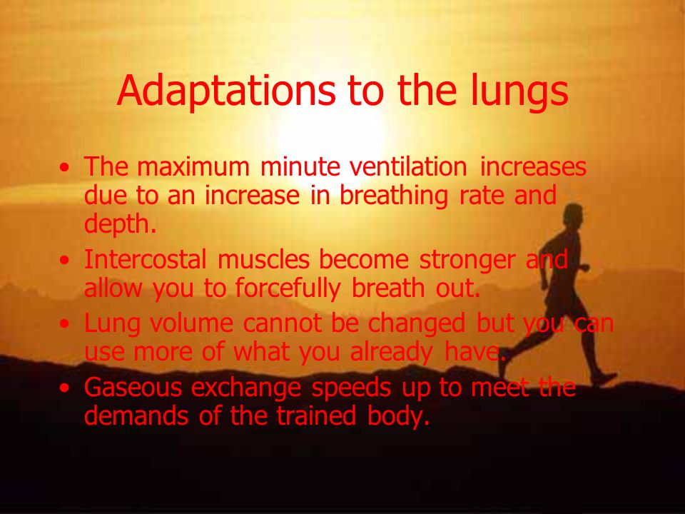 Adaptations to the lungs