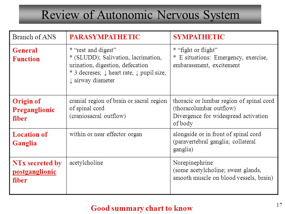 Anatomy And Physiology Autonomic Nervous System Ppt Video Online