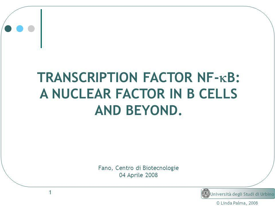 TRANSCRIPTION FACTOR NF-kB: A NUCLEAR FACTOR IN B CELLS