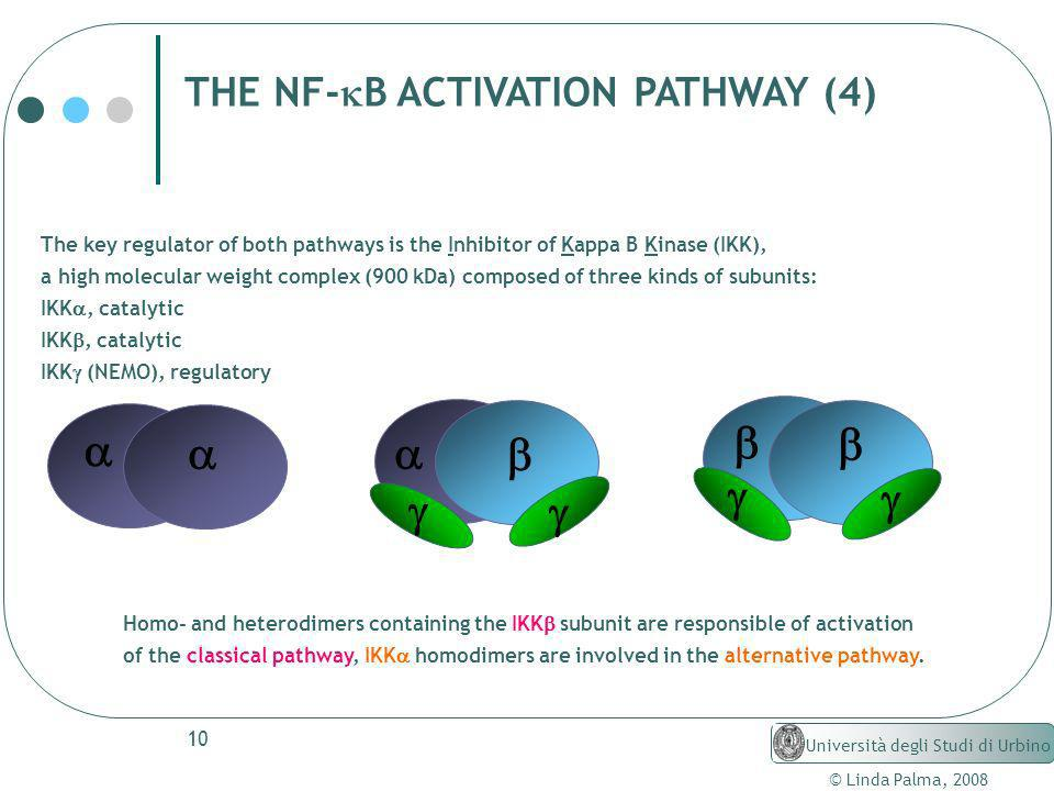THE NF-kB ACTIVATION PATHWAY (4)