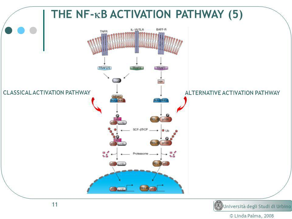 THE NF-kB ACTIVATION PATHWAY (5)