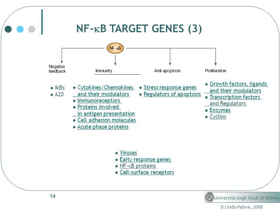 NF-kB TARGET GENES (3) ● Growth factors, ligands and their modulators