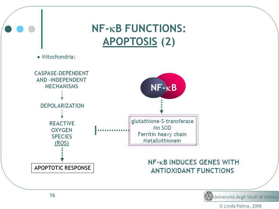 NF-kB INDUCES GENES WITH ANTIOXIDANT FUNCTIONS