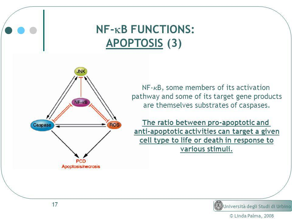 NF-kB FUNCTIONS: APOPTOSIS (3) NF-kB, some members of its activation