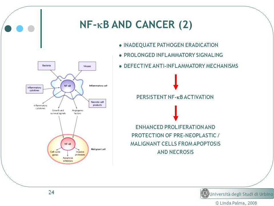 NF-kB AND CANCER (2) ● INADEQUATE PATHOGEN ERADICATION