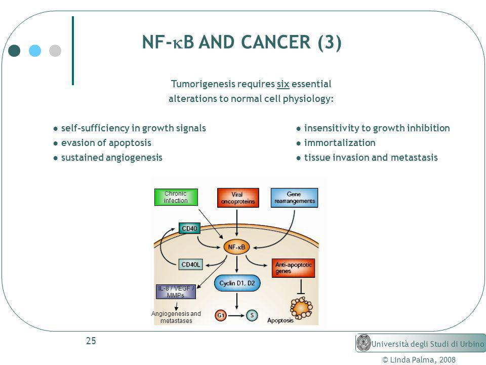 NF-kB AND CANCER (3) Tumorigenesis requires six essential