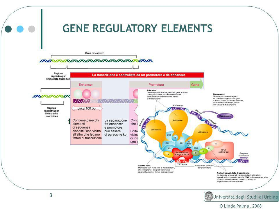 GENE REGULATORY ELEMENTS