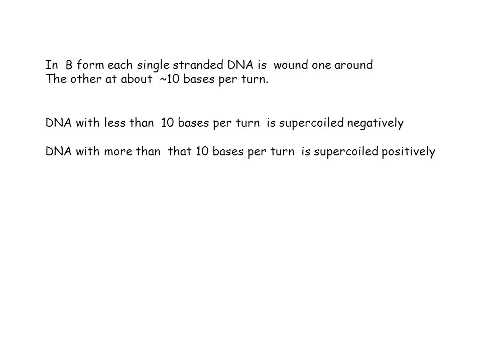 In B form each single stranded DNA is wound one around