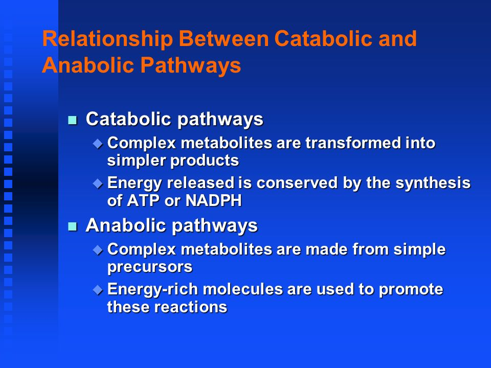 Relationship Between Catabolic and Anabolic Pathways