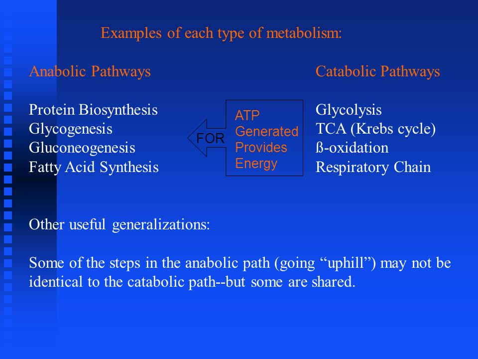 Examples of each type of metabolism: