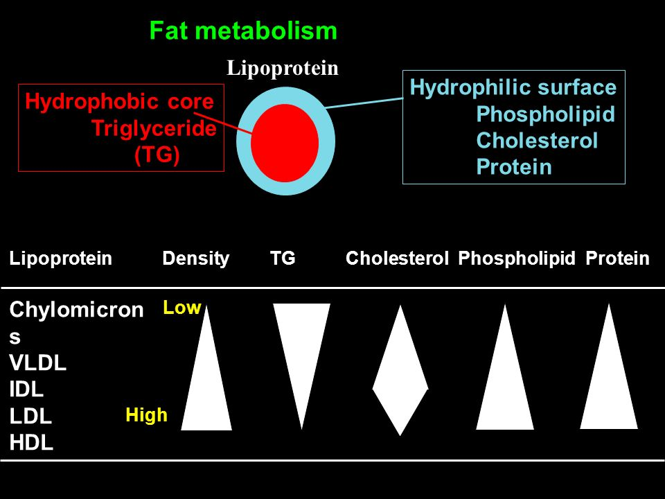 Fat metabolism Lipoprotein Hydrophilic surface Hydrophobic core
