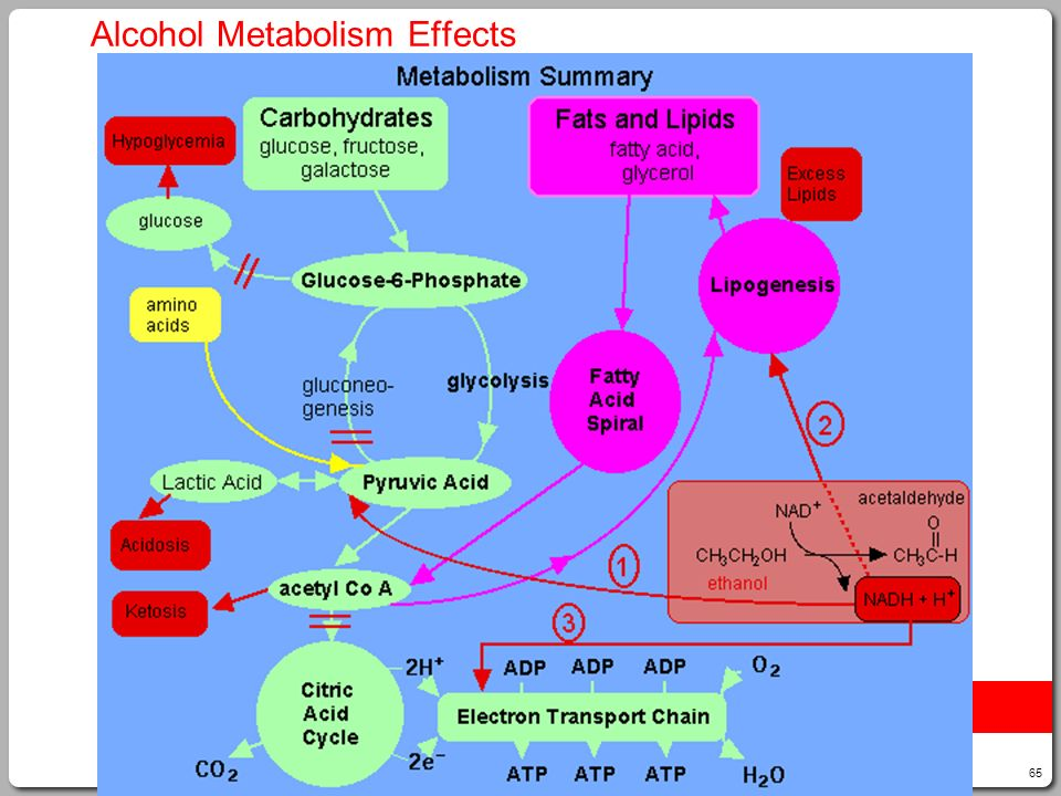 Alcohol Metabolism Effects