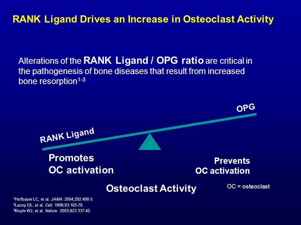 RANK Ligand Drives an Increase in Osteoclast Activity
