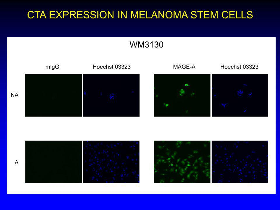 CTA EXPRESSION IN MELANOMA STEM CELLS