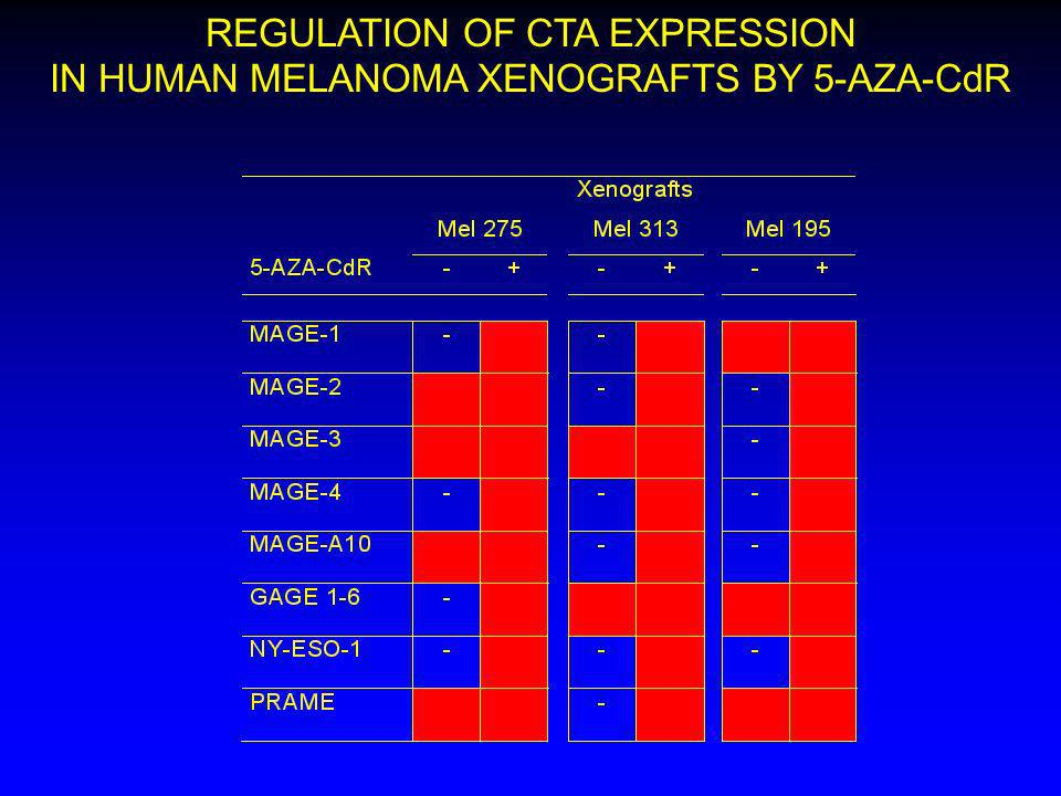 REGULATION OF CTA EXPRESSION IN HUMAN MELANOMA XENOGRAFTS BY 5-AZA-CdR