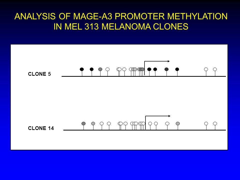 ANALYSIS OF MAGE-A3 PROMOTER METHYLATION