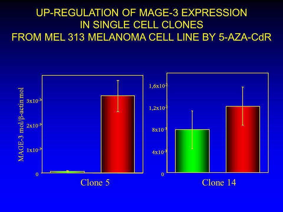 UP-REGULATION OF MAGE-3 EXPRESSION IN SINGLE CELL CLONES