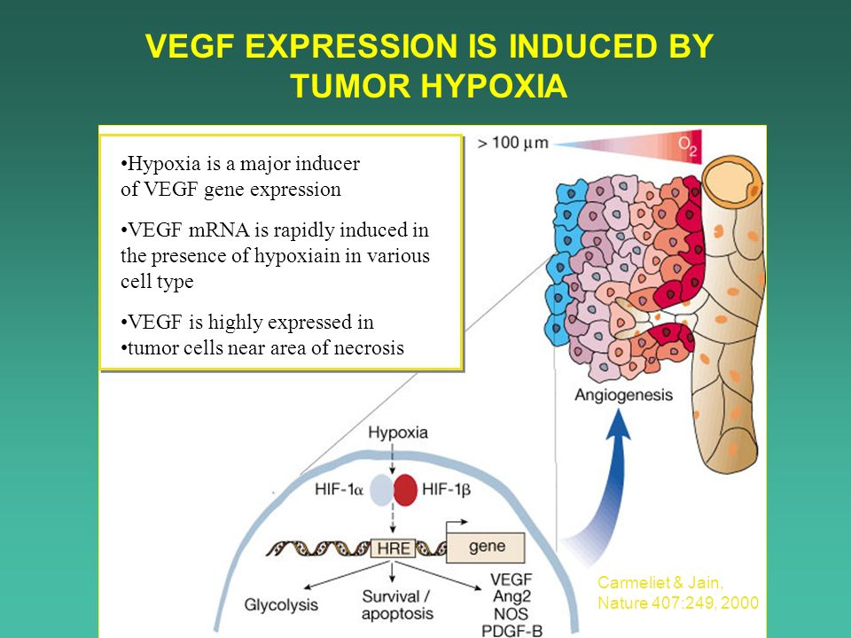 VEGF EXPRESSION IS INDUCED BY