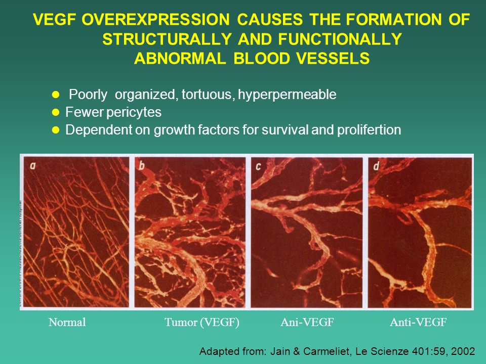 VEGF OVEREXPRESSION CAUSES THE FORMATION OF STRUCTURALLY AND FUNCTIONALLY ABNORMAL BLOOD VESSELS