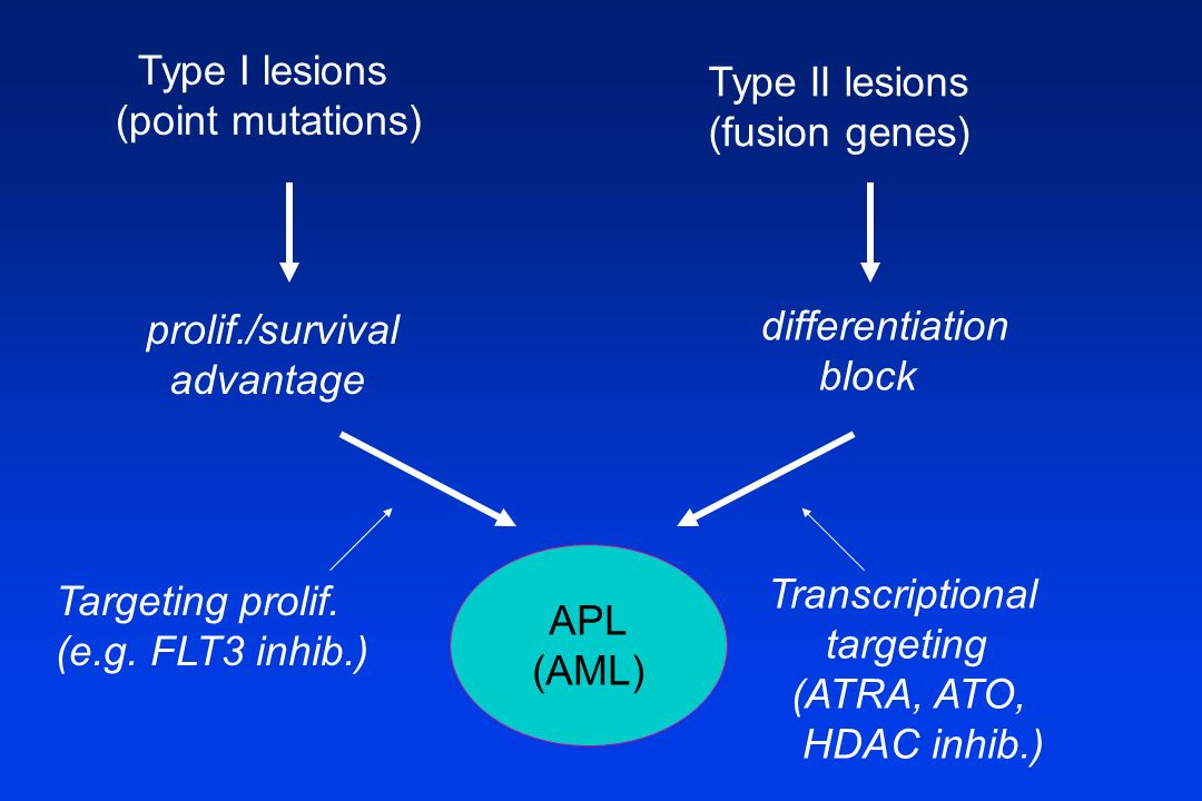 Type I lesions (point mutations) Type II lesions. (fusion genes) prolif./survival advantage. differentiation.