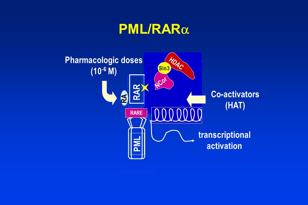 PML/RAR Pharmacologic doses Co-repressor (10-6 M) RAR Co-activators