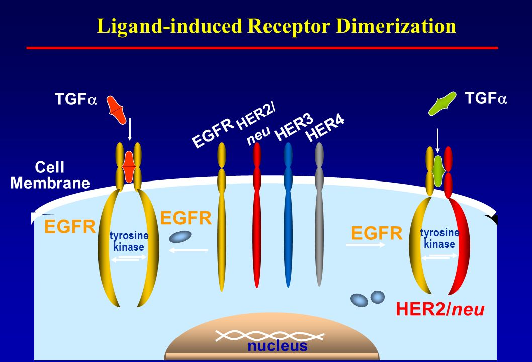 Ligand-induced Receptor Dimerization