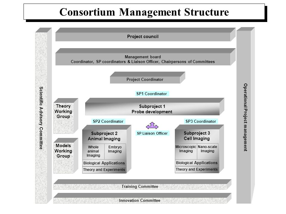 Consortium Management Structure