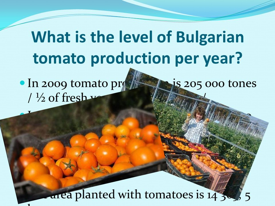 What is the level of Bulgarian tomato production per year