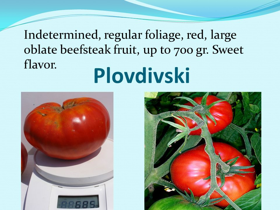 Indetermined, regular foliage, red, large oblate beefsteak fruit, up to 700 gr. Sweet flavor.