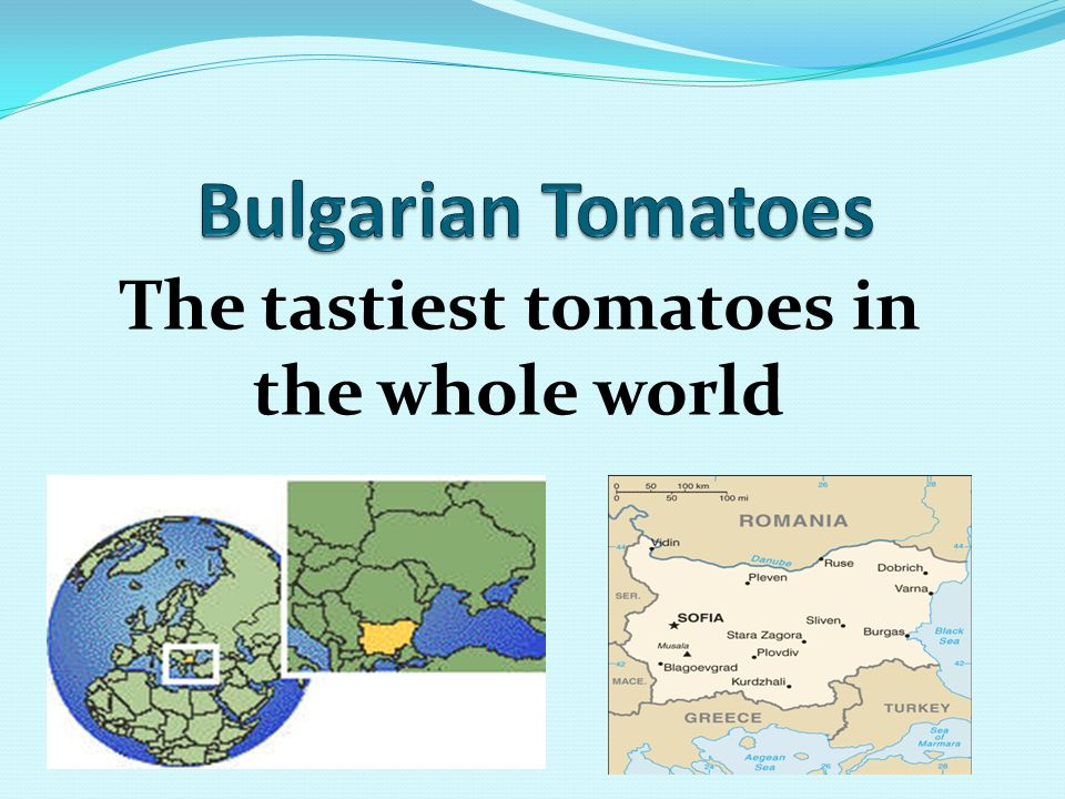 The tastiest tomatoes in the whole world