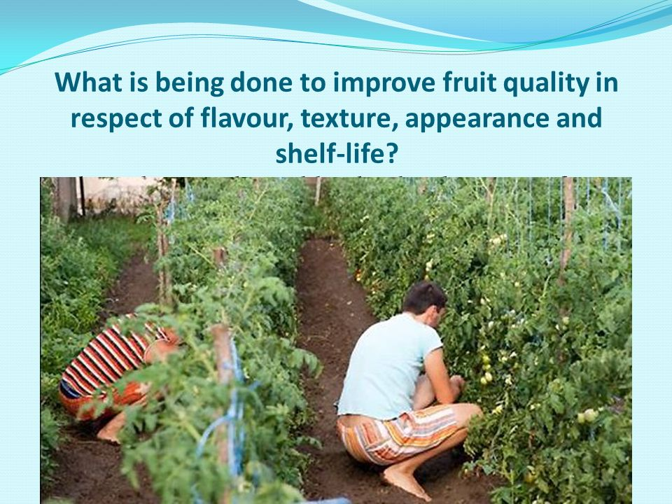 What is being done to improve fruit quality in respect of flavour, texture, appearance and shelf-life