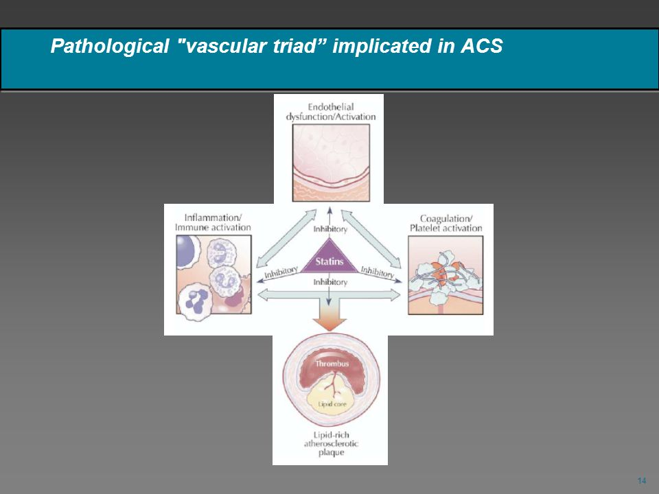 Pathological vascular triad implicated in ACS