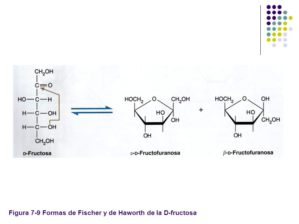 Fructosa Haworth