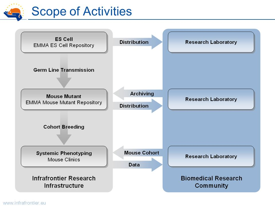Scope of Activities
