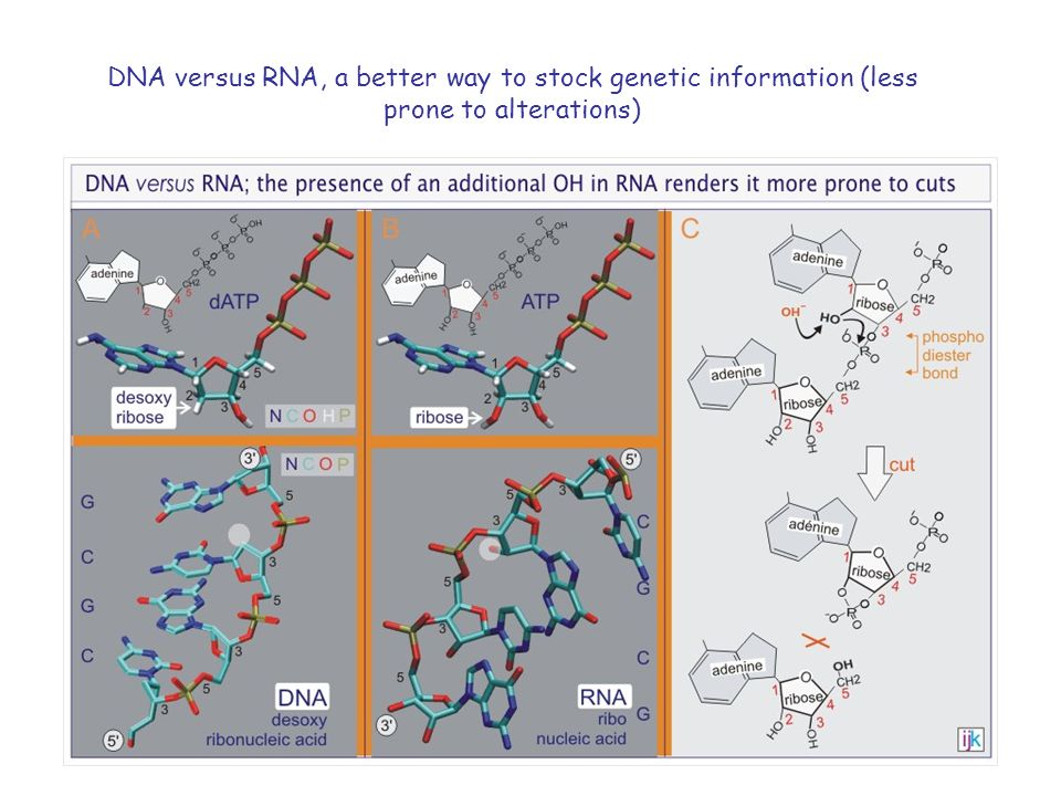 DNA versus RNA, a better way to stock genetic information (less prone to alterations)
