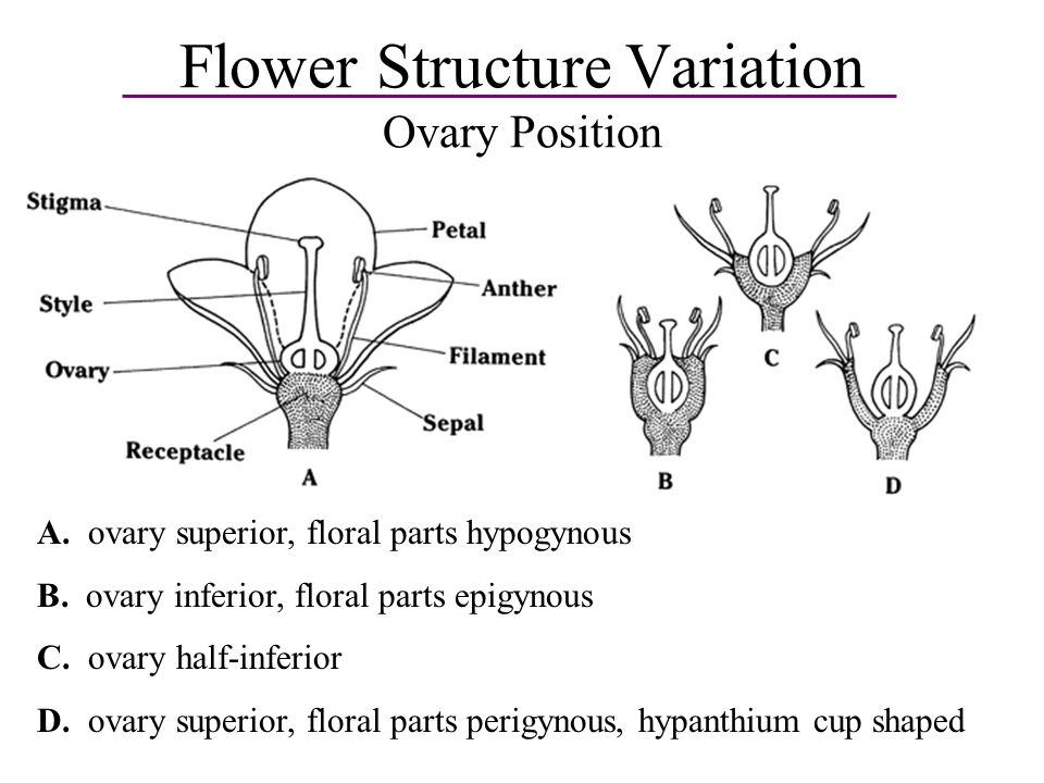 Flower structure ppt flowers healthy reive morphology flowers and fruits ppt video perfect flower anatomy lab vignette anatomy and physiology biology ccuart Image collections