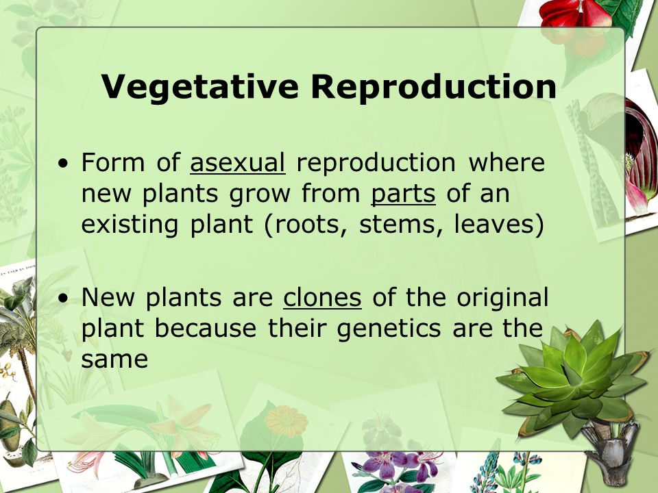 Is self pollination the same as asexual reproduction regeneration