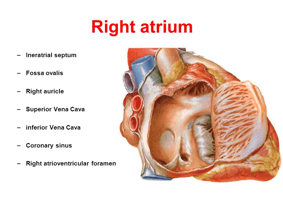 Circulatory System Cardiovascular system function: - ppt video ...