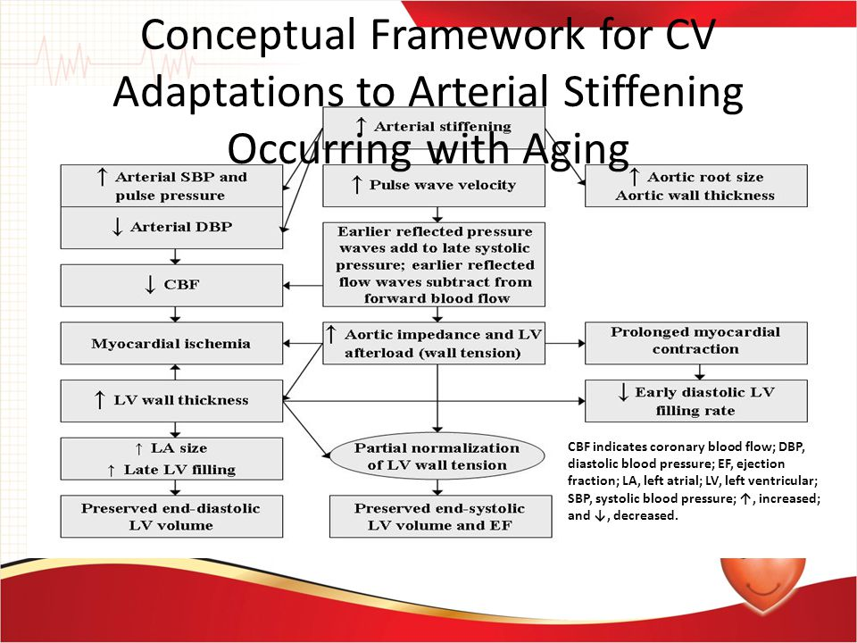 Conceptual Framework for CV Adaptations to Arterial Stiffening Occurring with Aging