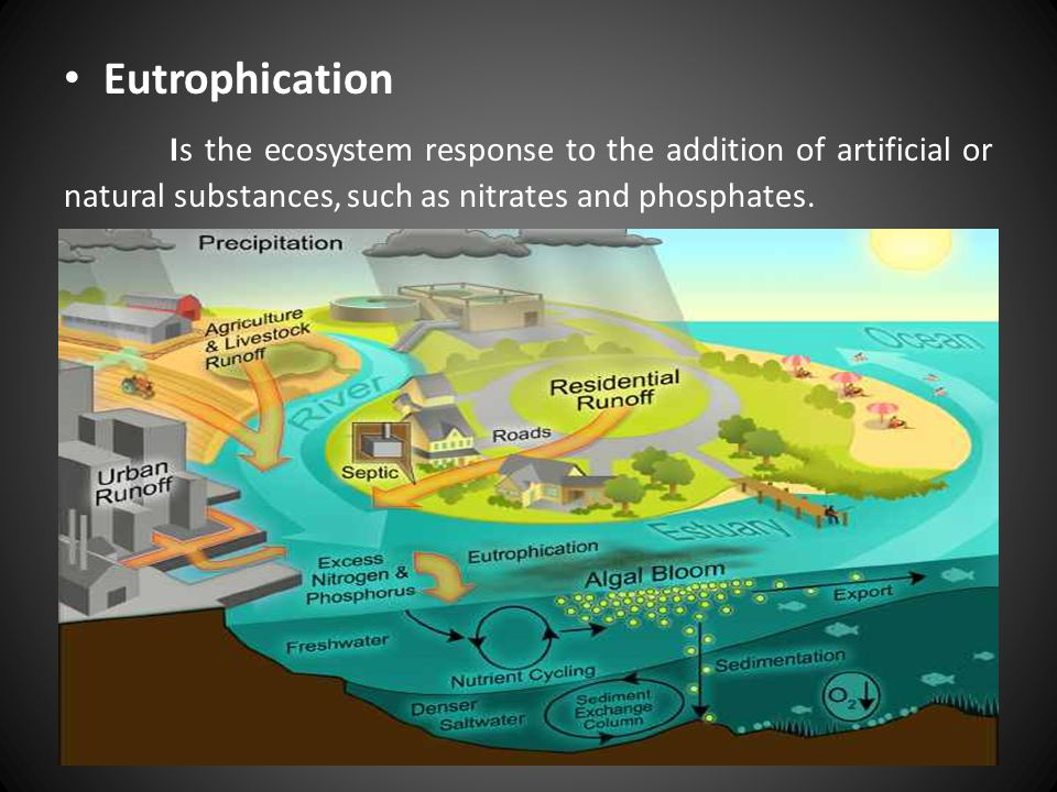Eutrophication Is the ecosystem response to the addition of artificial or natural substances, such as nitrates and phosphates.