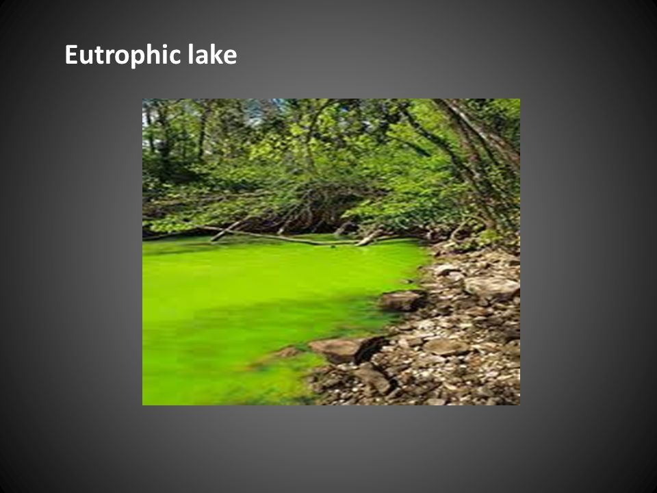 Eutrophic lake