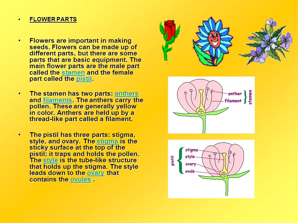 A presentation about flowers ppt video online download flower parts mightylinksfo