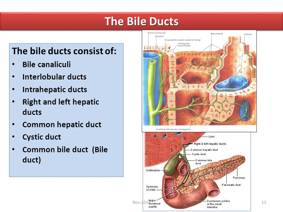 The Bile Ducts The bile ducts consist of: Bile canaliculi
