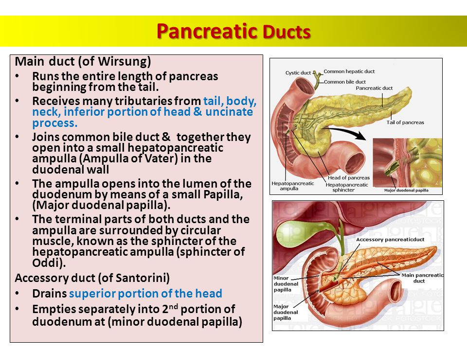 Pancreatic Ducts Main duct (of Wirsung)