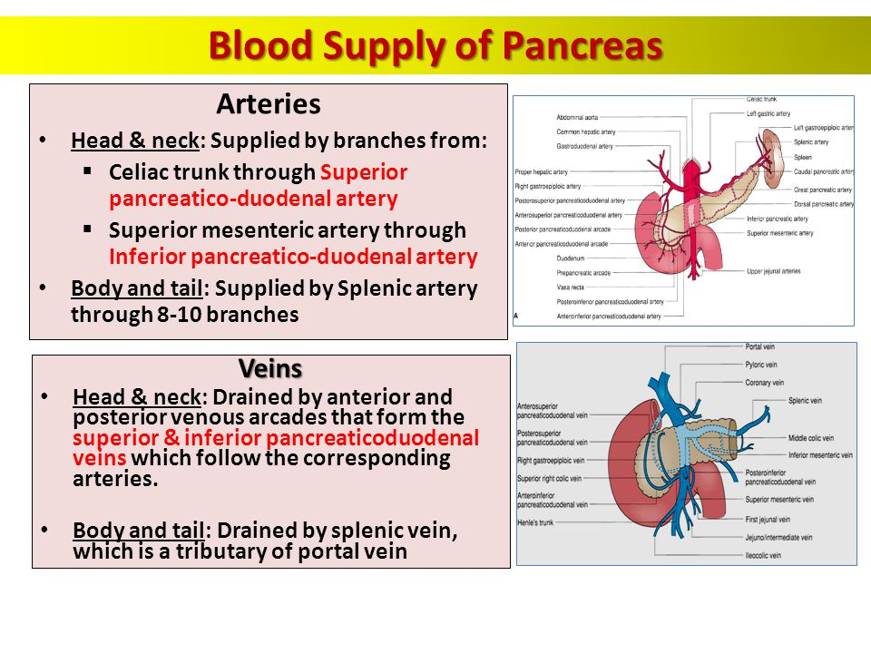Pancreas Biliary System Ppt Video Online Download