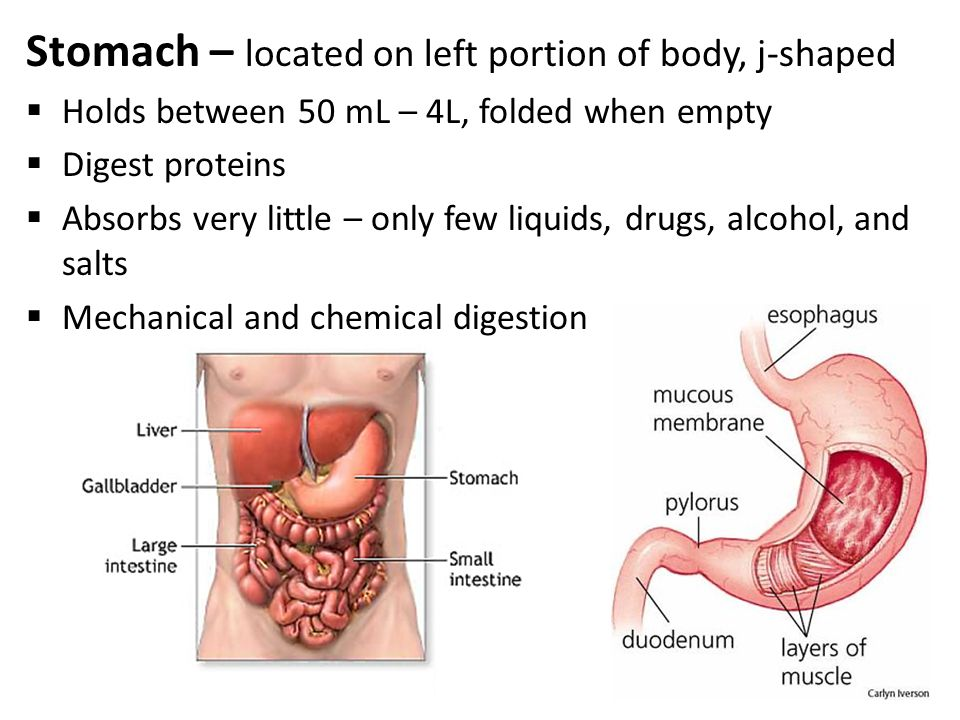 Anatomy Physiology The Digestive System Ppt Video Online Download