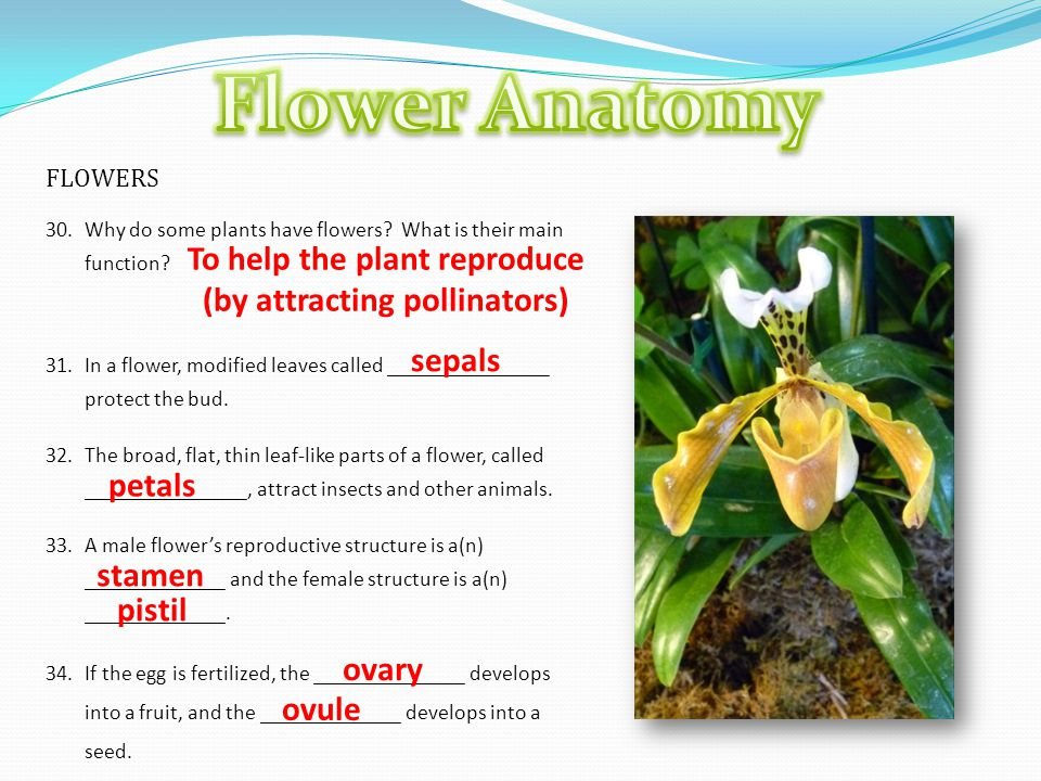 Flower Parts Diagram. - ppt video online download