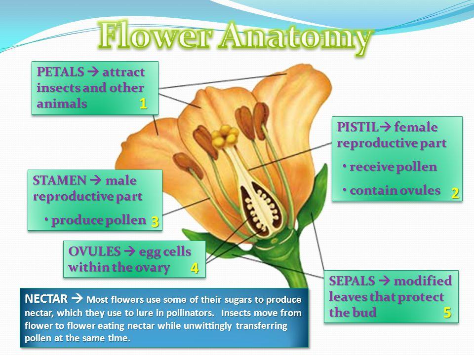 Flower Parts Diagram Ppt Video Online Download