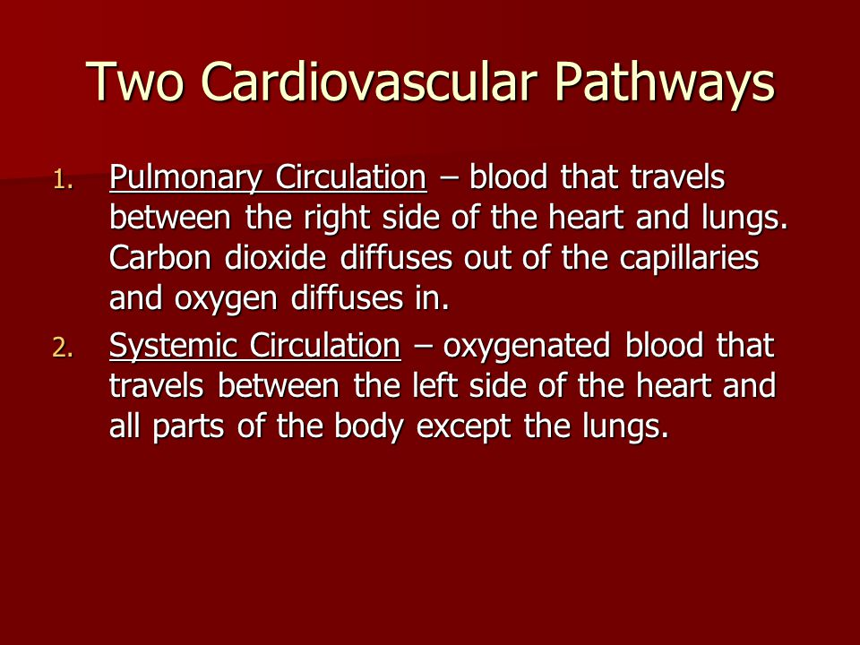 Two Cardiovascular Pathways